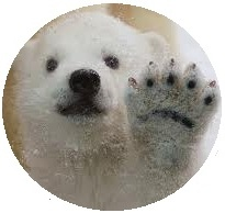 polar bear button, bear button, bear pin-back button, polar bear pin-back button, animal button, animal pin-back button, photo button